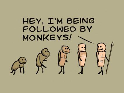 evolution monkeys