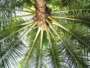 Lounging Under a Palm Tree