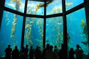 Monterey Bay Aquarium_Kelp Forest