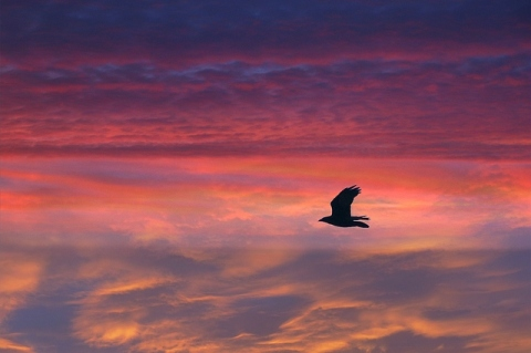 bird-flying-sunset-2865x1909_95023