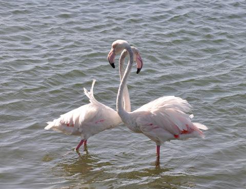 natural-park-of-las-lagunas-de-la-mata-torrevieja