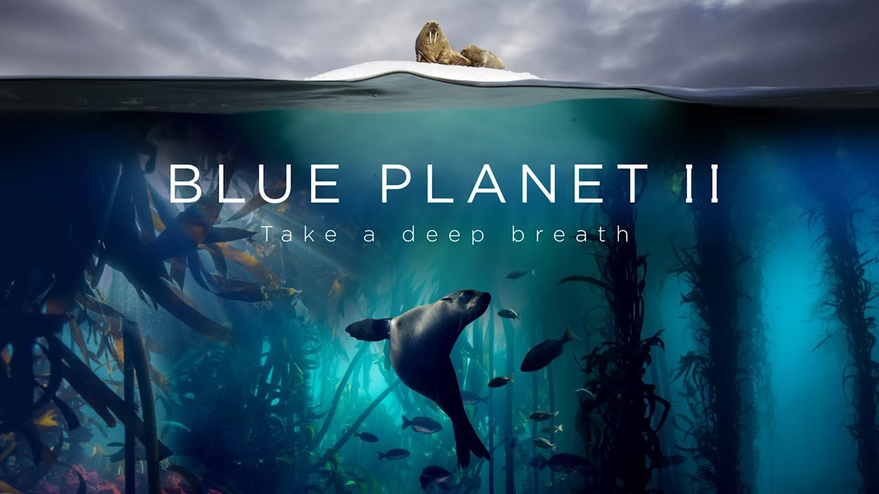 blue planet II natural history documentary series BBC