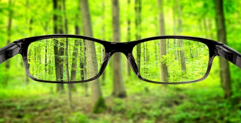 glasses-vision clear trees nature