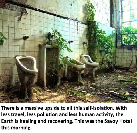 earth healing meme savoy hotel